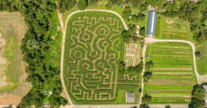 NYC-Corn-Maze-Queens-County-Farm-Amazing-Maize-Maze-Floral-Park-Queens