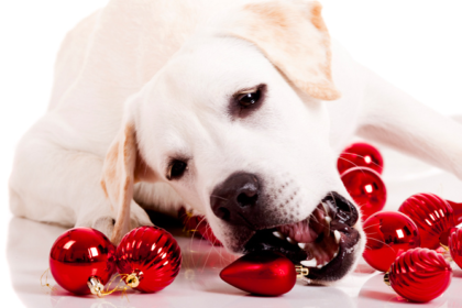 How do Pets React to the Holidays?