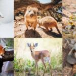 Top Ten Cutest Animals in Existence