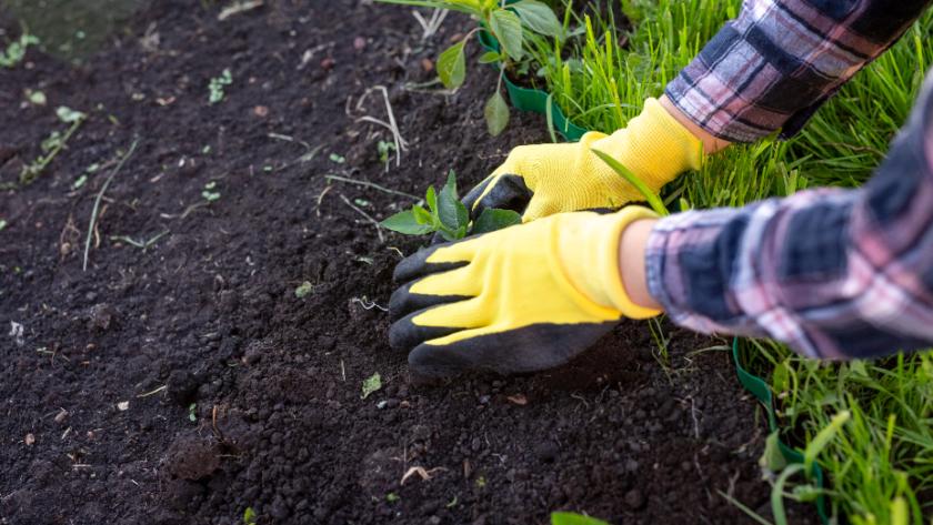 10 Reasons to Start a Garden