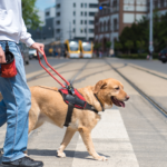 These 5 Breeds Make the Best Service Dogs